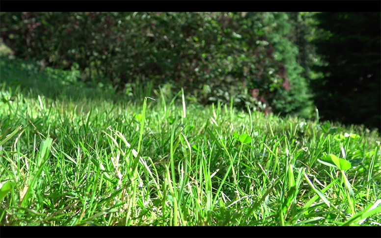 02_watching-grass-grow