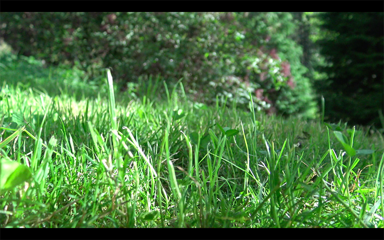 03_watching-grass-grow