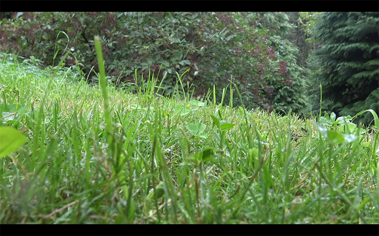 04_watching-grass-grow