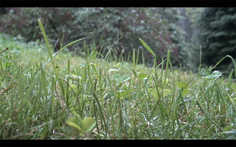 05_watching-grass-grow