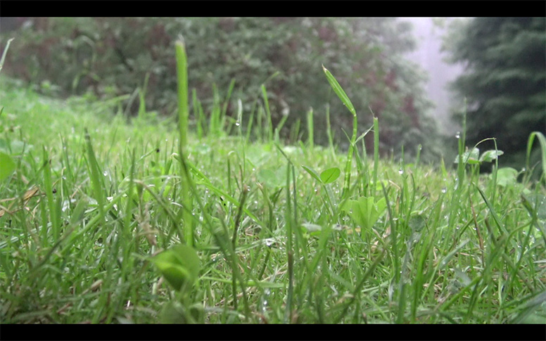 06_watching-grass-grow