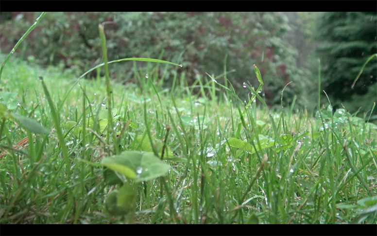 07_watching-grass-grow
