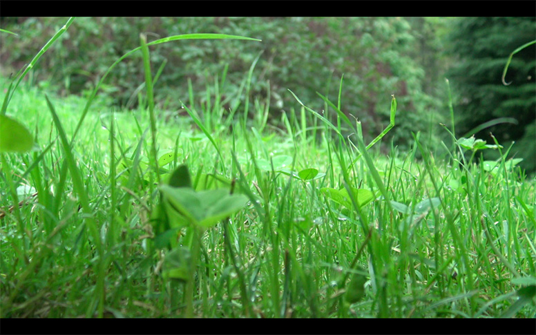 08_watching-grass-grow