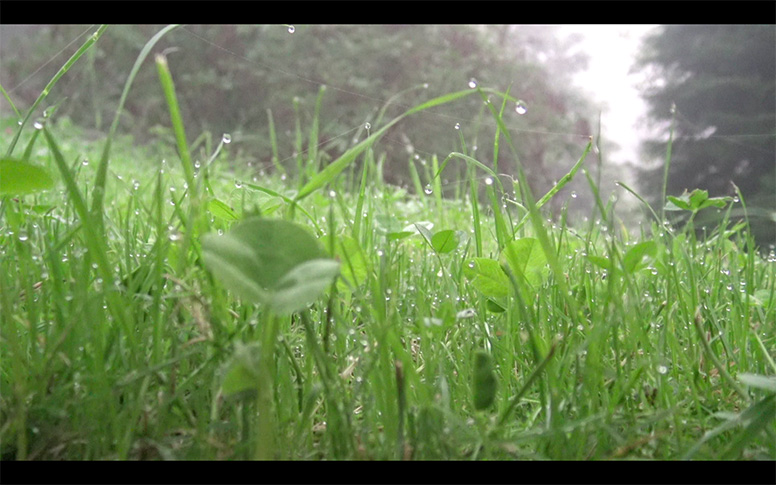 09_watching-grass-grow