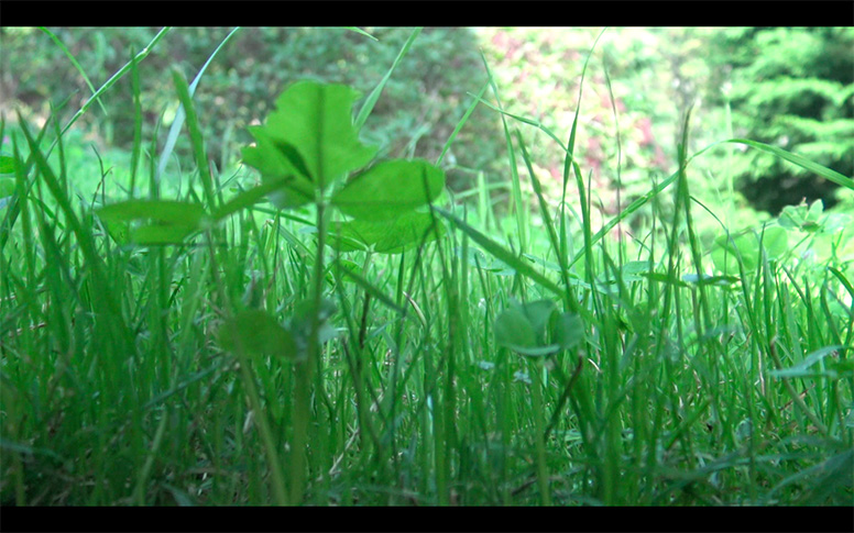 10_watching-grass-grow