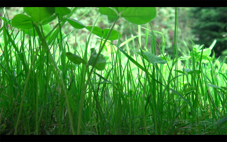 12_watching-grass-grow