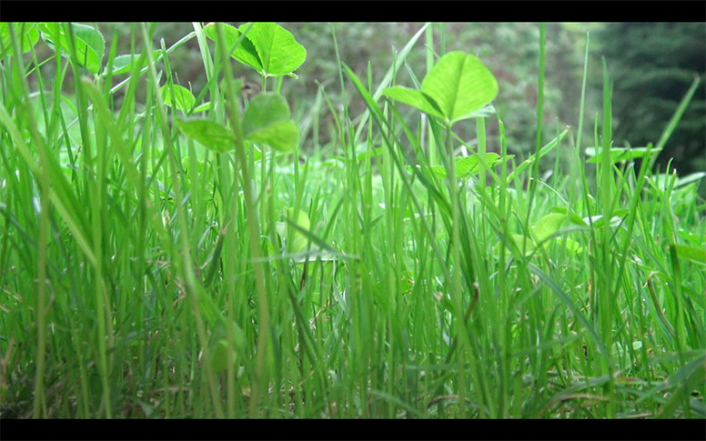 13_watching-grass-grow
