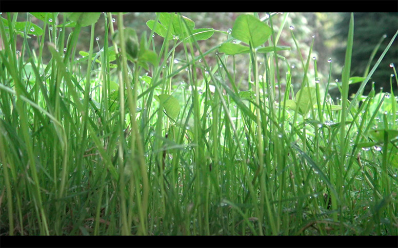 14_watching-grass-grow
