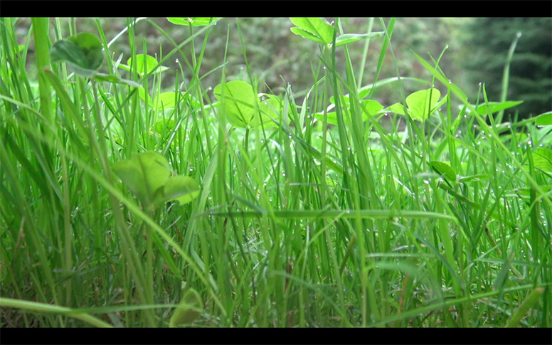 15_watching-grass-grow