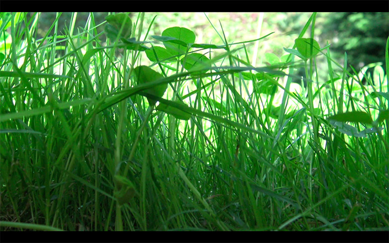 16_watching-grass-grow