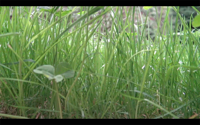 17_watching-grass-grow