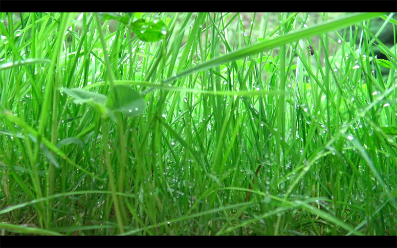 18_watching-grass-grow