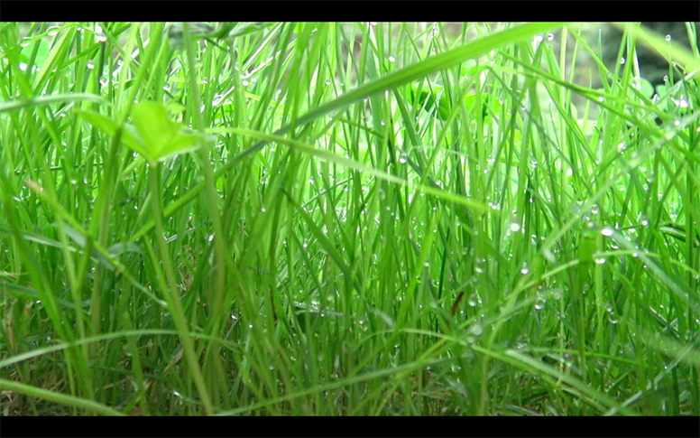 19_watching-grass-grow