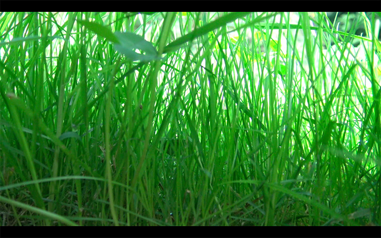 20_watching-grass-grow